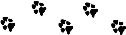 Picture - of dog paws.